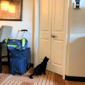 Kitty in hotel
